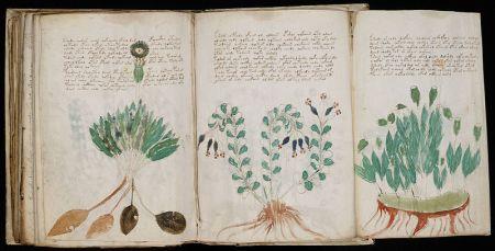 800px-Voynich_Manuscript_(170)